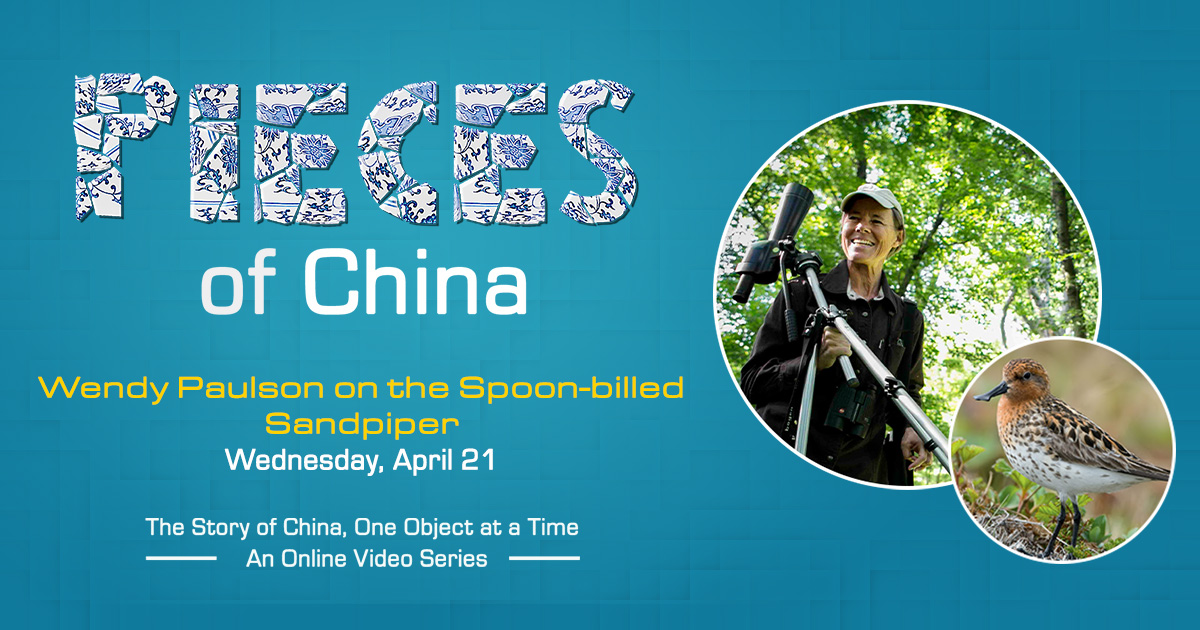 Pieces of China: Wendy Paulson on the Spoon-billed Sandpiper