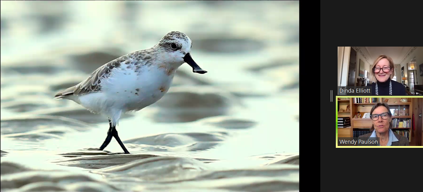 Recap: Pieces of China (S3, E9): Wendy Paulson on the Spoon-billed Sandpiper, 4.21.21